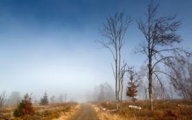 Картинка осень, деревья, дорога, туман