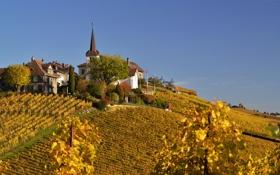 Обои осень, небо, башня, дома, холм, виноградник