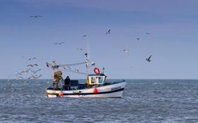 Картинка море, лодка, чайки, рыбаки