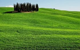 Обои зелень, небо, деревья, поля