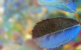 Картинка синий, природа, лист, листок, растение