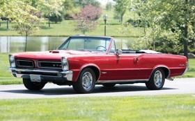 Обои красный, фон, 1965, Pontiac, GTO, Понтиак, передок