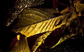 Обои ракурс, листья, осень, макросъемка, фото, капли, свет