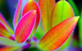 Обои листья, растение, природа, цвет