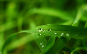 Картинка зелень, лето, трава, вода, капли, макро, травинка