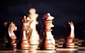 Обои дерево, спорт, игра, шахматы, доска, фигуры