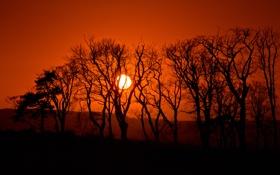 Обои небо, солнце, деревья, закат, горы, силуэт