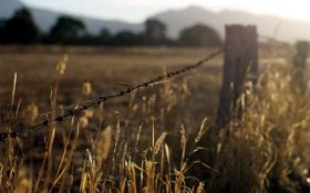 Картинка трава, закат, природа, забор