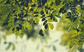 Обои зелень, листья, макро, ветки, природа, фон, ветви