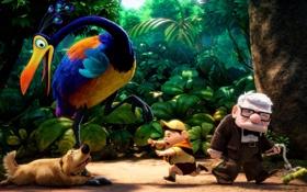Обои лес, птица, мультфильм, собака, мальчик, старик, Pixar