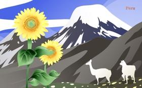 Обои цветы, горы, путешествия, подсолнух, туризм, страна, Peru