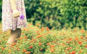 Картинка поле, настроение, цветы, девочка