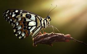 Картинка лето, макро, лист, бабочка, насекомое