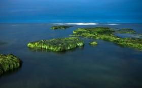 Картинка море, небо, водоросли, камни, скалы, горизонт