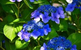 Картинка листья, растение, тень, ковер, свет, лепестки, цветы