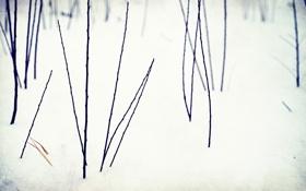 Обои Зима, снег, цветы