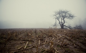 Картинка поле, туман, дерево