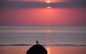 Обои закат, птица, море