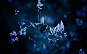 Обои макро, синева, фон, растения