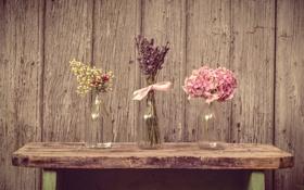 Картинка лаванда, лепестки, натюрморт, цветы