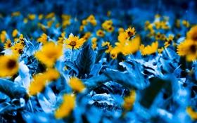 Обои цветы, природа, растения, фотографии, сады