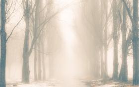 Картинка тропа, силуэты, монохромный, туман, Деревья