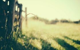 Обои природа, трава, забор