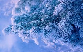 Картинка снег, ветки, ель, мороз