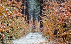 Картинка дорога, осень, лес, снег, деревья, Канада, Онтарио