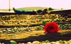 Обои рельсы, девушка, человек, роза, цветок, дорога, настроения