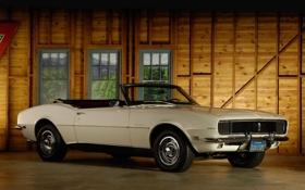 Обои белый, стена, окна, кабриолет, шевроле, мускул кар, camaro