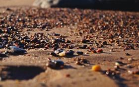 Картинка песок, пляж, солнце, макро, озеро, камни, боке