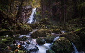 Картинка лес, деревья, камни, водопад, природа. река