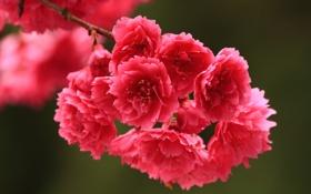 Обои весна, ветка, цветы