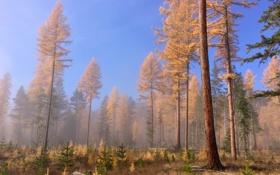 Обои лес, деревья, природа, Canada, British Columbia, Prehistoric Woods