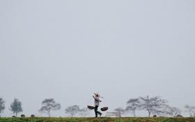 Обои поле, деревья, человек, корзины, серые облака