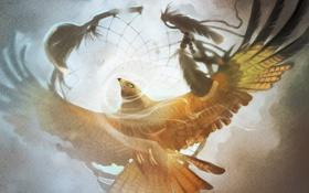 Обои небо, свобода, птица, орел, крылья