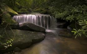 Картинка лес, река, ручей, камни, водопад, мох