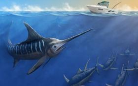 Обои море, рыба, катер, меченос, рыба меч