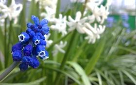 Обои макро, цветы, природа, роса, фокус, красиво