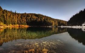 Обои лес, вода, снег, деревья, природа, озеро, отражение