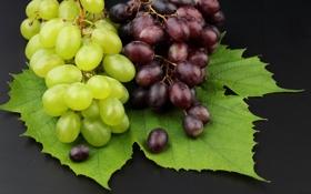 Обои листья, виноград, грозди