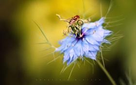 Картинка цветок, пчела, edgefieldBlossom