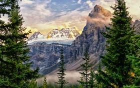Обои деревья, горы, вершины, ели, Канада, Альберта, Alberta