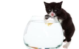 Картинка рыбалка, еда, аквариум, котик, рыбка