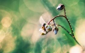 Обои капли, природа, ветка, макро, цветок