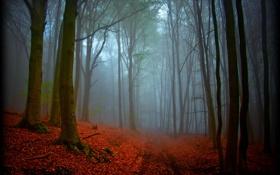Обои природа, лес, магия, дымка, осень