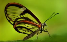 Обои насекомое, крылья, мотылек, бабочка