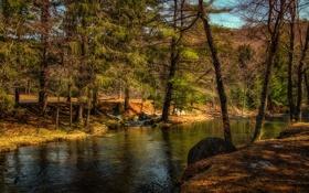 Картинка осень, лес, деревья, речка