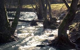 Картинка вода, река, поток